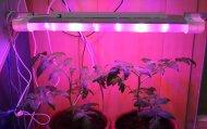 Выпуск светодиодных светильников для подсветки рассады и теплиц
